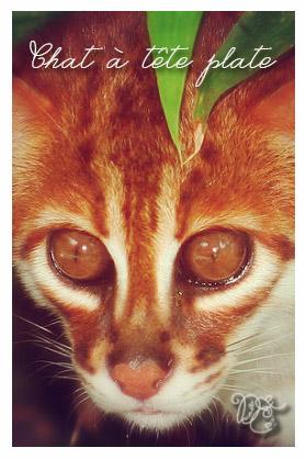 chatateteplate1
