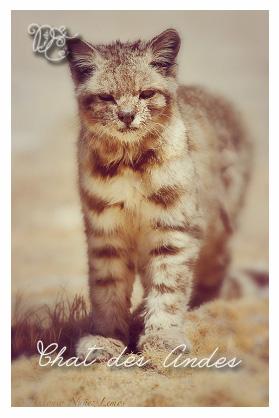 chatdesandes1