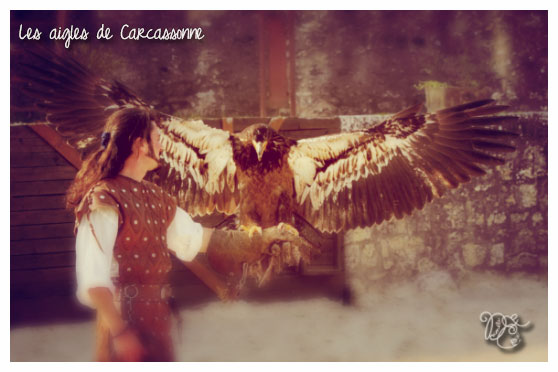 Aigles de Carcassonne