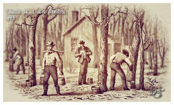 Collecte de la sève d'érable en 1893