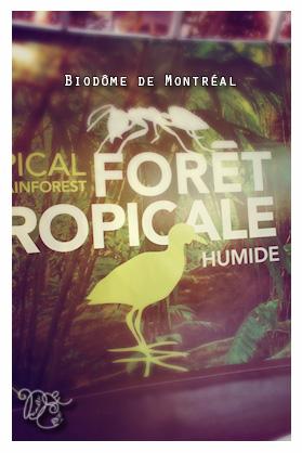 Forêt tropicale, Biodôme de Montréal