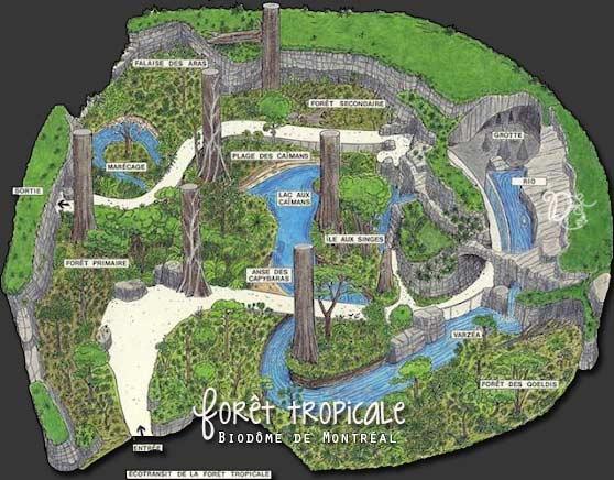 Plan de la forêt tropicale, Biodôme de Montréal