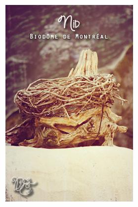 Nid, Biodôme de Montréal
