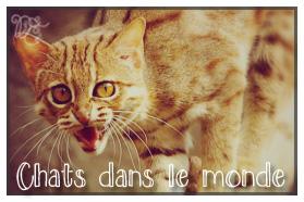 Chats dans le monde