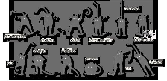 Attitudes du chat