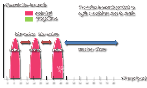 Production hormonale cycle anovulatoire de la chatte