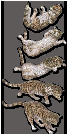 Équilibre du chat